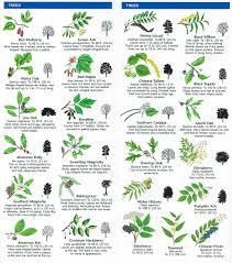 species identification woodlands conservancy scouts