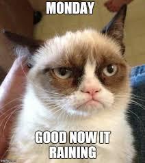 Good Meme Grumpy Cat - grumpy cat reverse memes imgflip