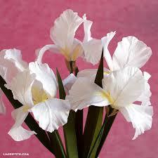 iris flowers crepe paper iris flowers lia griffith