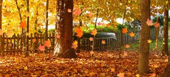 Fall Cleanup Landscaping by John Welch Enterprise Inc Fall Cleanup