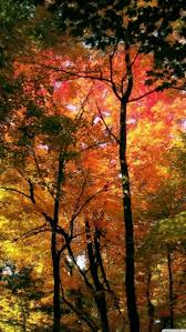 free fall wallpaper for computer best 25 fall leaves wallpaper ideas on pinterest fall wallpaper