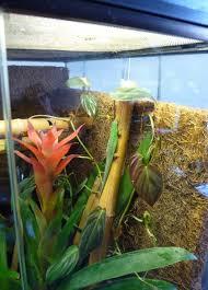 how to setup a day gecko terrarium pethelpful