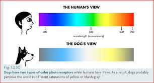Color Blind What Do They See Can Dogs See Color