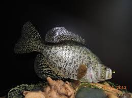 fly fishing home decor fish mount fish replica taxidermy home décor black crappie