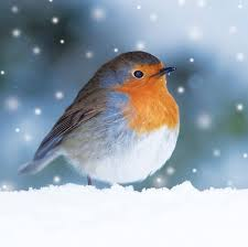 10 best actionaid christmas cards images on pinterest christmas