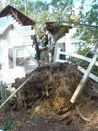 insurance repair major tree damage richmond remodel