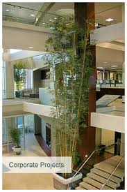 artificial plants melbourne artificial trees design inscape