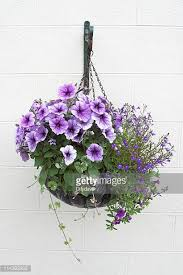 Hanging Flowers Hanging Basket Stock Photos And Pictures Getty Images