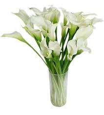 callalily flower flower