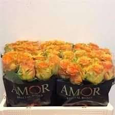 wholesale fresh flowers cosima 60cm wholesale flowers florist supplies uk