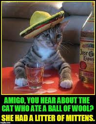 Jose Cuervo Meme - senor don gato stand up comic imgflip