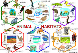 animal habitats worksheets mreichert kids worksheets