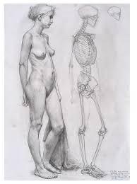 Female Anatomy Figure Anatomy Study Anatomy For Artists Pinterest Anatomy Study