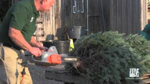 caring for your fresh cut christmas tree waterloo gardens youtube