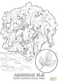White Oak Tree Drawing Oak Tree Coloring Page Virtren Com