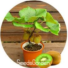 compare prices on fruit trees sale shopping buy low price