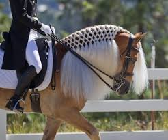 hairstyles for horses image result for horse hairstyles horses pinterest horse