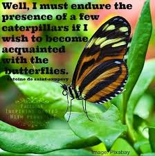 wedding quotes nature 106 best wedding quotes images on butterfly