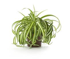 7 easy care plants that clean the air indoors