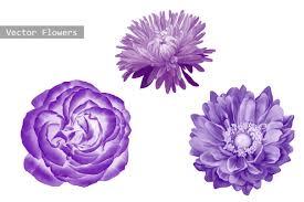 purple flowers purple flowers aster dahlia objects creative market