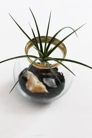 create an unforgettable air plant terrarium