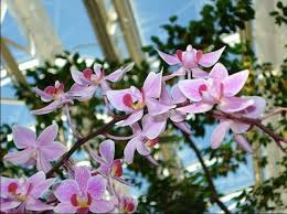 Botanical Garden Orchid Show Orchid Show Returns To The Missouri Botanical Garden