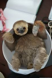 sloth pictures show animals side after rescues
