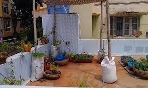 organic terrace gardening my story lavannya u0027s blog