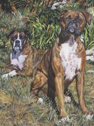 boxer dog crufts 2014 brindle boxer dog art canvas print of lashepard painting 12x16