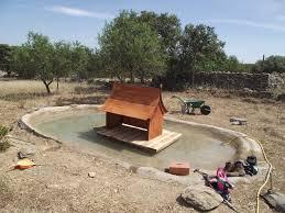 triyae com u003d backyard ponds for ducks various design inspiration