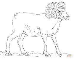 desert bighorn sheep coloring page free printable coloring pages