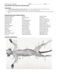 cat skeletal anatomy gallery learn human anatomy image