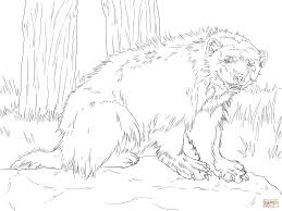 download wolverine animal coloring pages ziho coloring