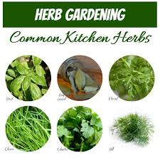 herb chart growing herbs how to grow store and use fresh herbs