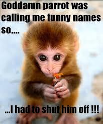 Monkey Meme - hilarious monkey funniest memes daily funny memes