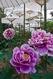 133 best my japanese garden diy images on pinterest gardening