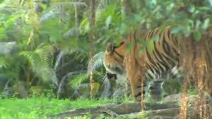 tiger bites zookeeper at zoo miami