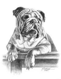 379 best pet portraits dog drawings u0026 sketches images on pinterest