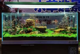 Aquascape Layout Masters Show Aquascaping At Aquarama 2016