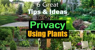 Backyard Privacy Ideas 6 Great Tips And Ideas To Create Privacy Using Plants Balcony