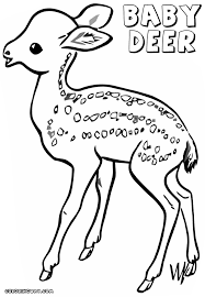 baby deer coloring pages coloring pages download print