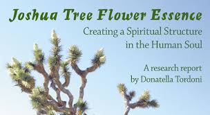 joshua tree flower essence