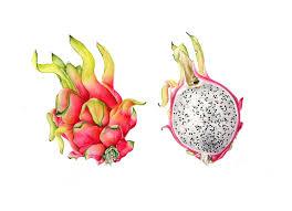 plants native to san diego bagsc exhibition u201ccornucopia u201d to open at the san diego botanic