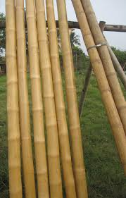 Decorative Bamboo Sticks Best Bamboo Cane Pole Stake All Decor Ideas For Fences Custom