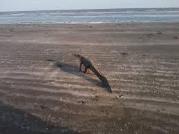 Louisiana beaches images Where to go in louisiana holly beach cameron fishing pier php