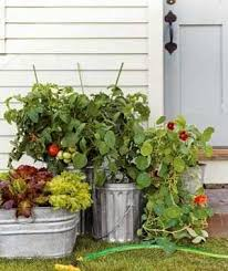 indoor gardening 22 container gardens in bloom