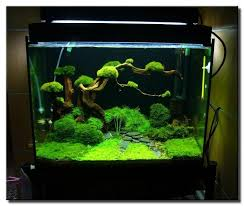 Aquascape Nj 41 Best Aquascape Images On Pinterest Aquarium Ideas