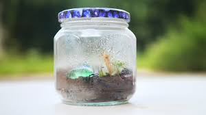 how to make a bug terrarium 12 steps with pictures wikihow