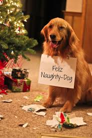 Christmas Dog Meme - 32 doh dogs that ruined the holidays dog christmas dog and holidays