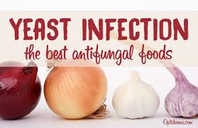 the best antifungal foods how to combat candida yeast infection